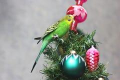 Papuga na nowego roku drzewie obrazy stock