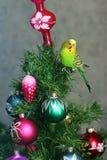 Papuga na nowego roku drzewie zdjęcia stock