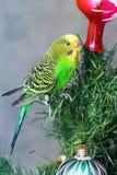 Papuga na nowego roku drzewie zdjęcia royalty free