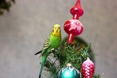 Papuga na nowego roku drzewie fotografia stock