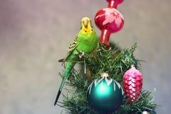 Papuga na nowego roku drzewie fotografia royalty free