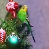 Papuga na nowego roku drzewie obraz royalty free