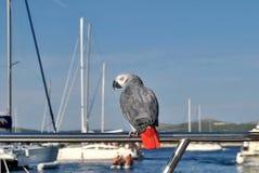 Papuga na wakacje obraz royalty free