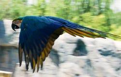 Papuga przy popołudniem Obraz Stock