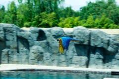 Papuga przy popołudniem Zdjęcie Stock