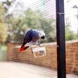 Papuga przy zoo Zdjęcie Stock