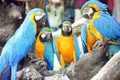 Papuga, ptak Zdjęcie Stock