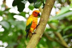 Papuga sadza gałęziastego dnia światło fotografia stock