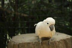 papuga umieszczał Obrazy Stock