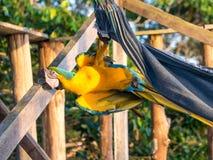 Papuga w dżungli Zdjęcie Royalty Free