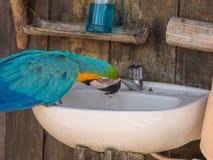 Papuga w dżungli Zdjęcia Royalty Free