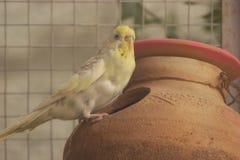 Papuga w gniazdeczku zdjęcie stock