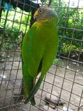 Papuga w klatce Obrazy Stock
