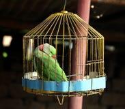 Papuga w klatce Zdjęcie Royalty Free