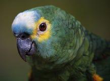 Papuga w Kuala Lumpur ptaka parku Zdjęcie Stock