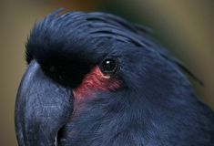 Papuga w Kuala Lumpur ptaka parku, Malezja Zdjęcia Royalty Free