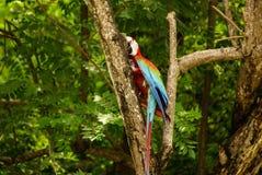 Papuga w parku, wyspa Mucura, Kolumbia Zdjęcie Royalty Free