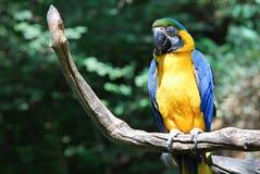 Papuga w Praga zoo Fotografia Royalty Free