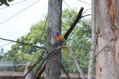 Papuga w Praga zoo Obraz Stock