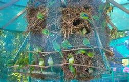 Papuga w swój gniazdeczku Obrazy Royalty Free