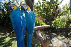 papugi 2 Fotografia Royalty Free