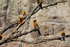 papugi fotografia stock