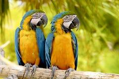 papugi Zdjęcie Royalty Free