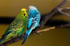 papugi Zdjęcia Royalty Free