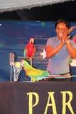 papugi koszykówki grać Zdjęcie Stock