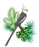 Papugi kreskówki wektoru ilustracja Papuga ustaleni Egzotyczni ptaki Zdjęcie Royalty Free