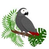 Papugi kreskówki wektoru ilustracja Papuga ustaleni Egzotyczni ptaki Obraz Stock