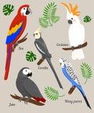 Papugi kreskówki wektoru ilustracja Papuga ustaleni Egzotyczni ptaki Fotografia Stock