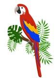 Papugi kreskówki wektoru ilustracja Papuga ustaleni Egzotyczni ptaki Obraz Royalty Free