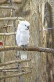 Papugi muzealne obrazy stock