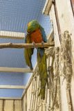 Papugi muzealne fotografia royalty free