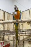 Papugi muzealne zdjęcie stock
