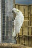 Papugi muzealne zdjęcie royalty free