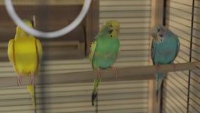 Papugi odpoczynki zbiory wideo
