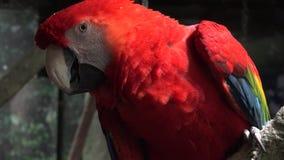 Papugi, ptaki, zwierzęta, przyroda, natura zbiory
