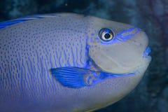 Papugi ryba Obraz Stock