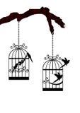 Papugi w klatce Zdjęcie Stock