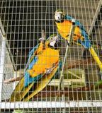 Papugi w klatce przy kurortu parkiem fotografia stock
