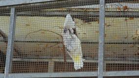 Papugi w klatki sztuce zbiory wideo