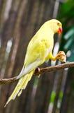 Papugi w zoo. Obraz Royalty Free