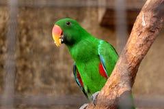 Papuzi łasowania jedzenie Obraz Stock