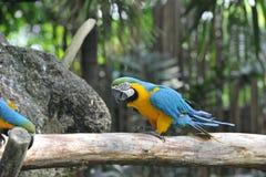 Papuzi ptak Zdjęcie Royalty Free