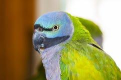 Papuzi ptak Zdjęcie Stock