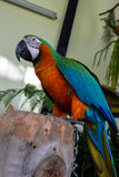 Papuzi ptak Zdjęcia Stock