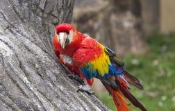 Papuzi ptak przy zoo Obrazy Stock