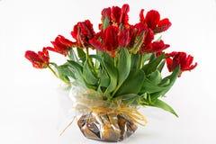papuzi tulipany obraz royalty free